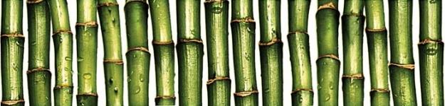 Бордюр Jungle C-JU1C021 зеленый